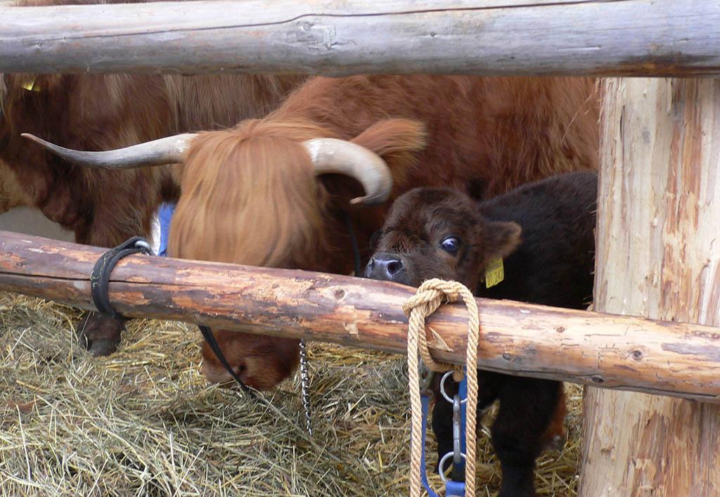 03 rinteln aktuell oeko bauernmarkt landwirtschaft landbau bio