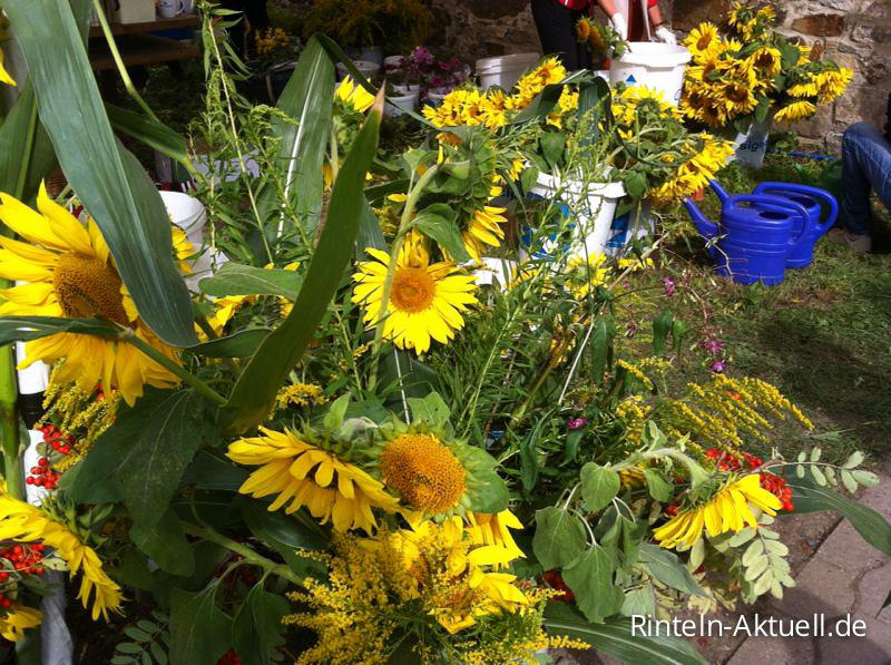06 rinteln aktuell sonnenblumenfest kloster moellenbeck