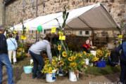 Sonnenblumenfest im Kloster Möllenbeck