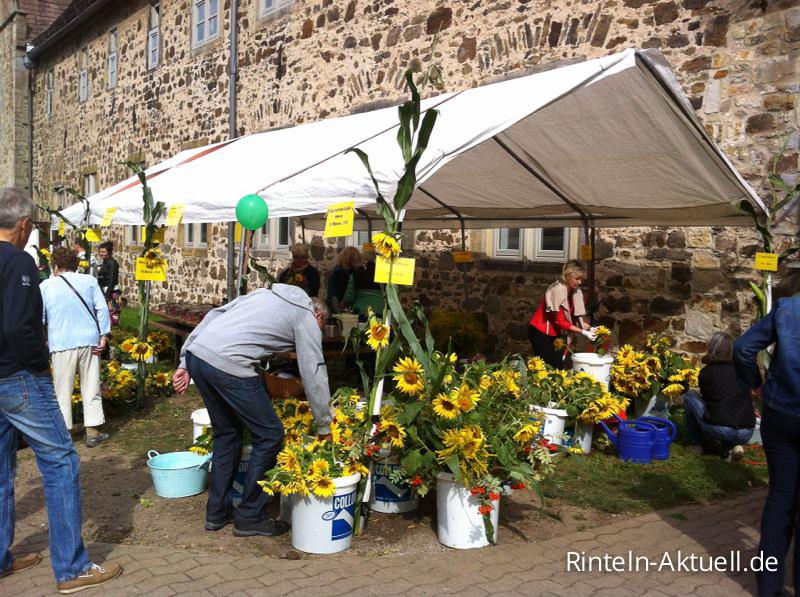07 rinteln aktuell sonnenblumenfest kloster moellenbeck