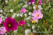 Bitumen statt Blumen? Politik und Botanik vermischen sich im Bauausschuss