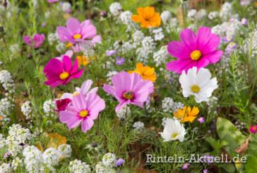 Farbenfrohe Blütenpracht für mehr Sommergefühl und gute Laune