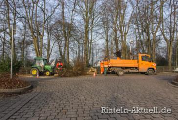Kugelrobinien machen Platz für Lebkuchenbäume in der Wallstraße