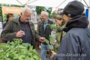 Wechselkurs Eins zu Eins: Tomatentauschbörse auf dem Rintelner Marktplatz