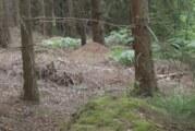 Unterwegs im Reich der Waldameisen: Naturschutzjugend besucht die nützlichen Waldbewohner in Obernkirchen