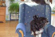 Auf den Hund gekommen: Kadoschs Luna meldet sich zu Wort