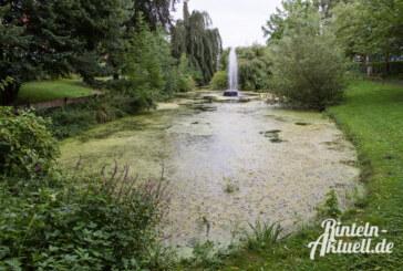 Es grünt so grün: Was ist mit dem Teich an der Dauestraße passiert?