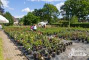 Ein Wochenende mit Rosen und Stauden: Es grünt so grün bei der Baumschule Fechner in Krankenhagen