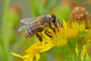 Die geheimnisvolle Welt von Biene, Hummel & Co. in Rinteln