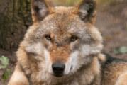 Junge Naturschützer zu Besuch im Wolfscenter Dörverden