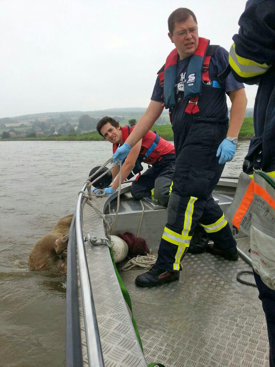 Die Feuerwehr bringt den Tierkadaver an Land.