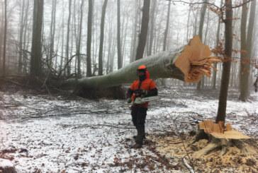 Fricke Schaumburg Forstbetriebe und der Ofenhof Schaumburg: Zwei starke Partner für schönes Feuer