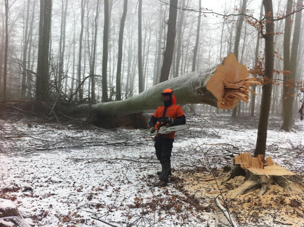 Fricke Schaumburg Forstbetriebe übernimmt von der Baumfällung bis hin zur Logistik die komplette Abwicklung der Holzverarbeitung.