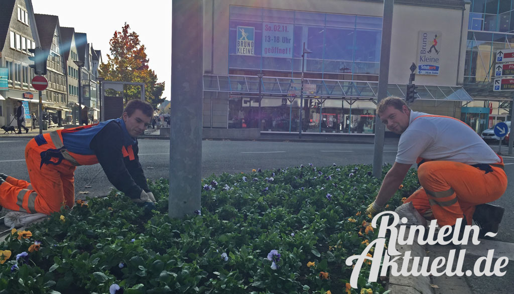 02-rintelnaktuell-blumenpflanzung-stiefmuetterchen