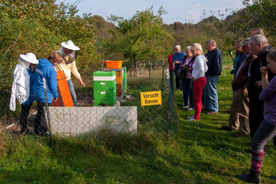 Viel Wissenswertes zum Thema Bienen gab es auf dem Apfelfest auch zu erfahren. Foto: NABU