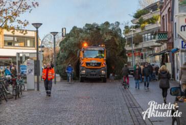 Sonderfahrt mit Hindernissen: Rintelner Weihnachtsbaum steht auf dem Marktplatz