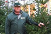 O Tannenbaum: Jetzt noch schnell einen Baum zu Weihnachten sichern