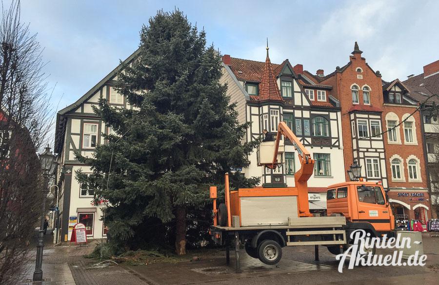 Rintelner weihnachtsbaum wird zum zweiten mal gef llt for Weihnachtsbaum fa r fensterbank