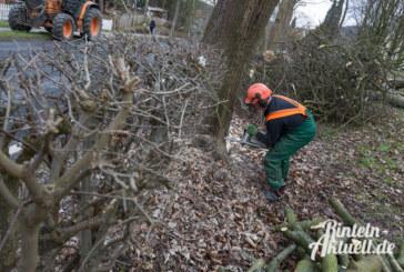 Lizenz zum Sägen: Ahornbäume in der Waldkaterallee gefällt