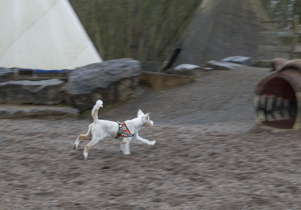01-rintelnaktuell-rettungshundestaffel-weserbergland-training