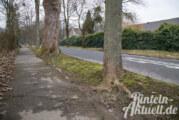 Verkehrsgefährdungen durch erkrankte Bäume: Eschentriebsterben auf dem Vormarsch
