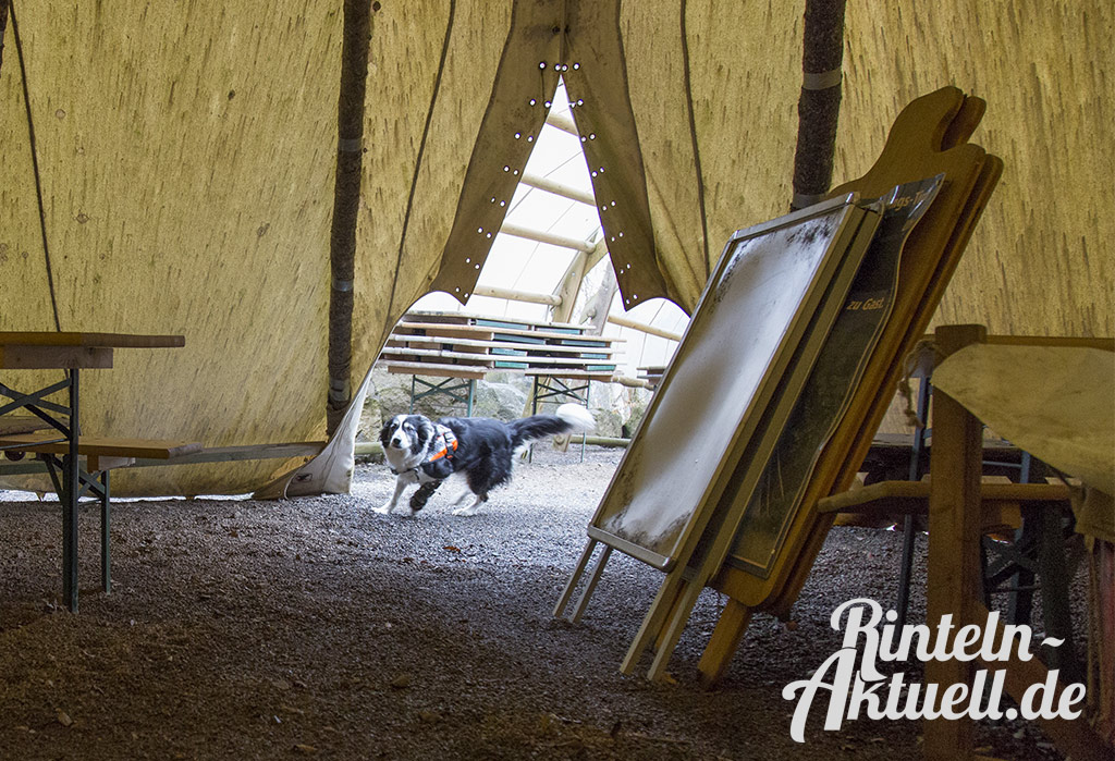 04-rintelnaktuell-rettungshundestaffel-weserbergland-training