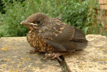 Stunde der Gartenvögel: Beliebte Mitmach-Aktion geht in die nächste Runde
