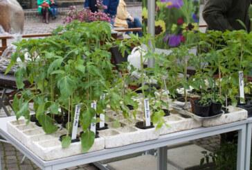 Tomatentauschbörse auf dem Rintelner Wochenmarkt