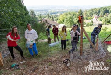 Den Wald mit lauter Bäumen sehen: Workcamp vereint Jugendliche aus aller Welt