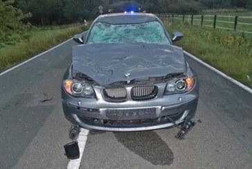 BMW stößt mit Pferd zusammen: Tier muss eingeschläfert werden, Auto schrott