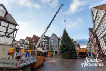 Der Weihnachtsbaum ist da: Blautanne steht am Rintelner Marktplatz