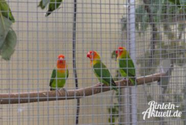 Bis zu 900 gefiederte Teilnehmer bei Vogelschau in Engern erwartet
