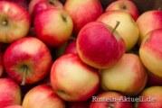 Hohenrode: Apfelfest von Lions Club und NABU Rinteln
