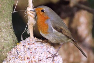 10 Tipps zur Winterfütterung von Vögeln