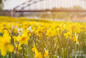 """""""Lust auf Frühling"""" – Frühlingsüberraschungen in Rintelns Einzelhandel am 19. März"""