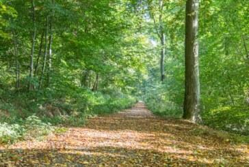 Holzeinschlag im FFH-Gebiet: NABU hofft auf baldige Klärung