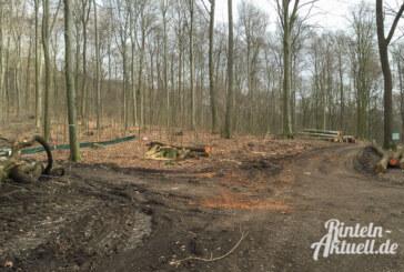 NABU bezweifelt Rechtmäßigkeit der Abholzung