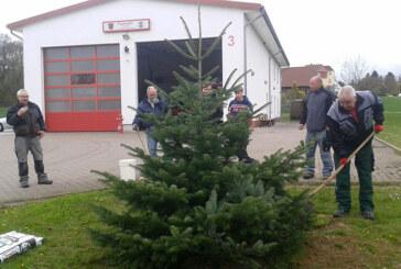 Feuerwehr Steinbergen pflanzt Weihnachtsbaum