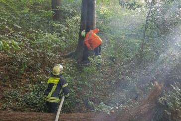 Todenmann: Baum in Brand gesteckt
