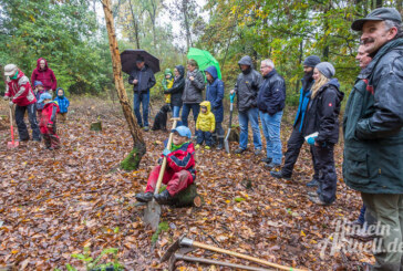 Baum-Nachwuchs für den Waldkindergarten in Strücken