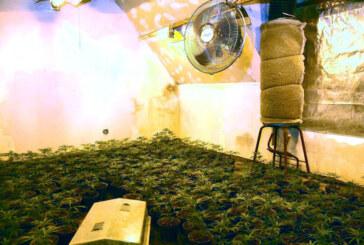 Marihuana-Plantage im Auetal: Polizei beschlagnahmt 500 Pflanzen