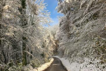 Achtung, Winter: Erhebliche Gefahren beim Betreten des Waldes