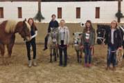 Erste Schritte mit dem Pferd: Vom Ponyclub zum Reiten und Voltigieren