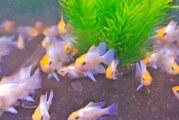 Fische, Pflanzen und Zubehör aller Art bei der Zierfischbörse am Doktorsee