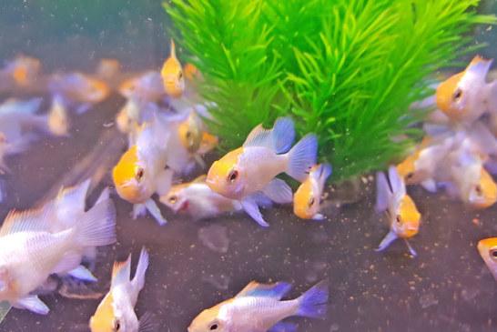 Gut besucht: Zierfischbörse des Aquarienvereins Scalar am Doktorsee