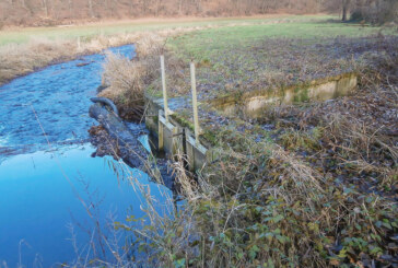 Verstopft: Treibholz versperrt Zufluss zum Oberen Eisenhammer