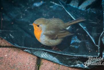 """Gartenvögel an Winterfutterplätzen vermisst: NABU hofft auf Mitmachaktion """"Stunde der Wintervögel"""""""