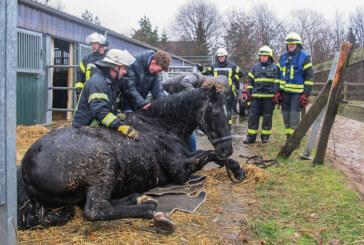 Feuerwehren Bückeburg und Rinteln kooperieren bei Pferde-Rettung
