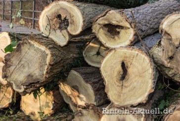 Straßensperrung in der Ost-Contrescarpe wegen Baumfällarbeiten