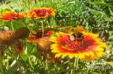Landkreis Schaumburg sucht Berater mit Herz für Bienen, Wespen und Hornissen